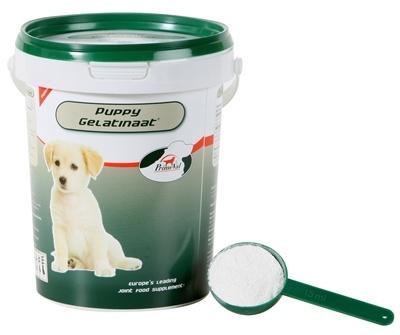 Primeval Primeval gelatinaat puppy