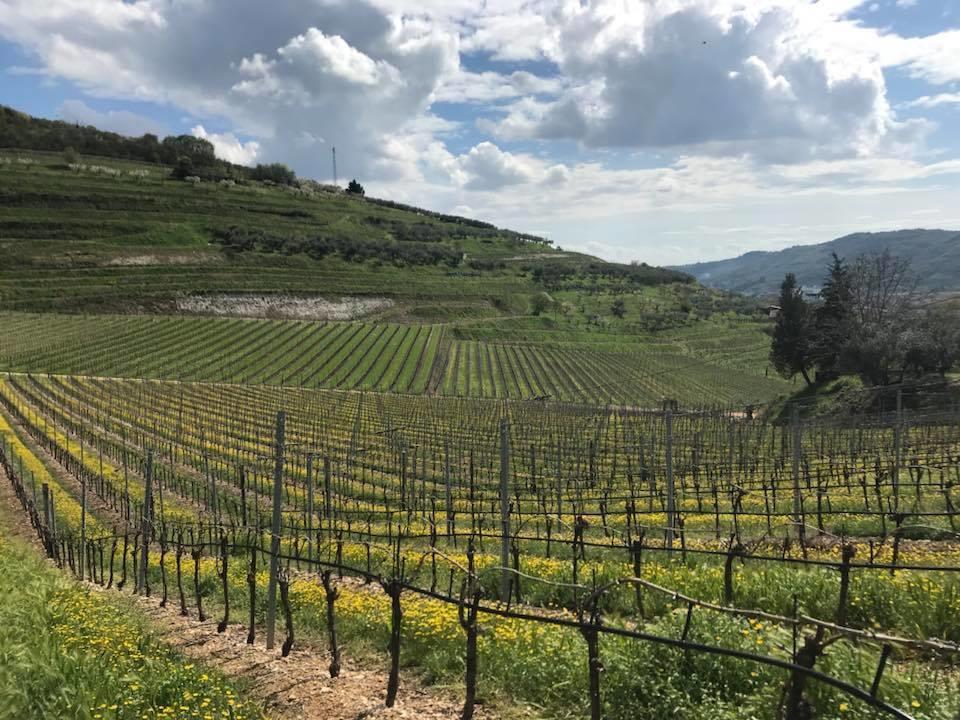 Nieuw Italiaans wijnhuis Antiche Terre