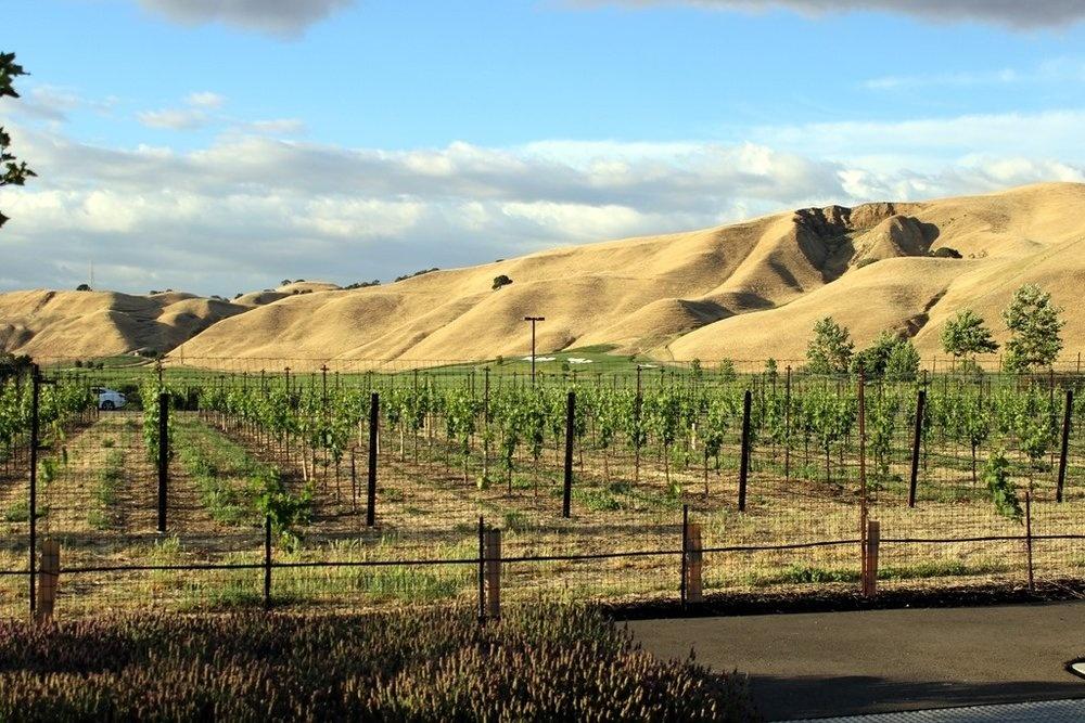 Waarom duurzame wijn?