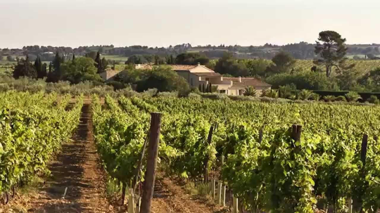 Op de bromfiets langs de wijngaarden, Paul Mas laat zien..