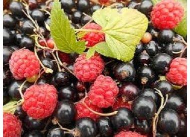 Rond & Fruité