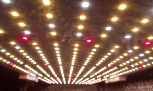 De 10 meest gemaakte fouten in het kweken met LED