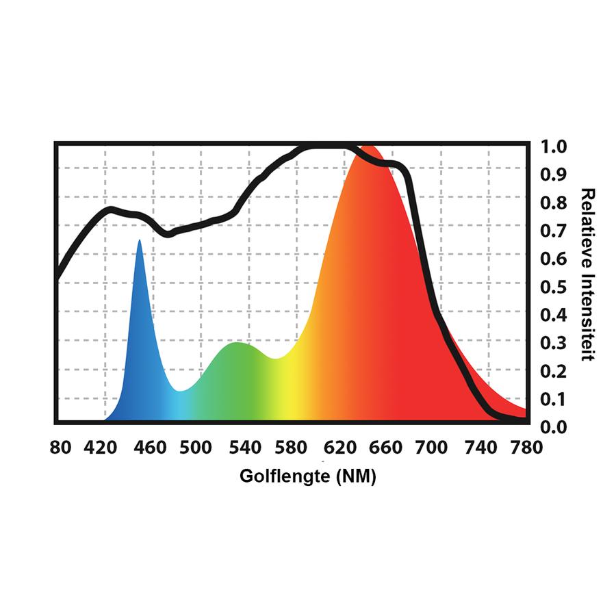 Spectro Light Xplosion 800-4