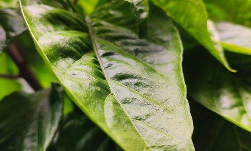 De complete lijst met de voordelen van LED-kweeklampen: de beste optie voor uw binnenplanten