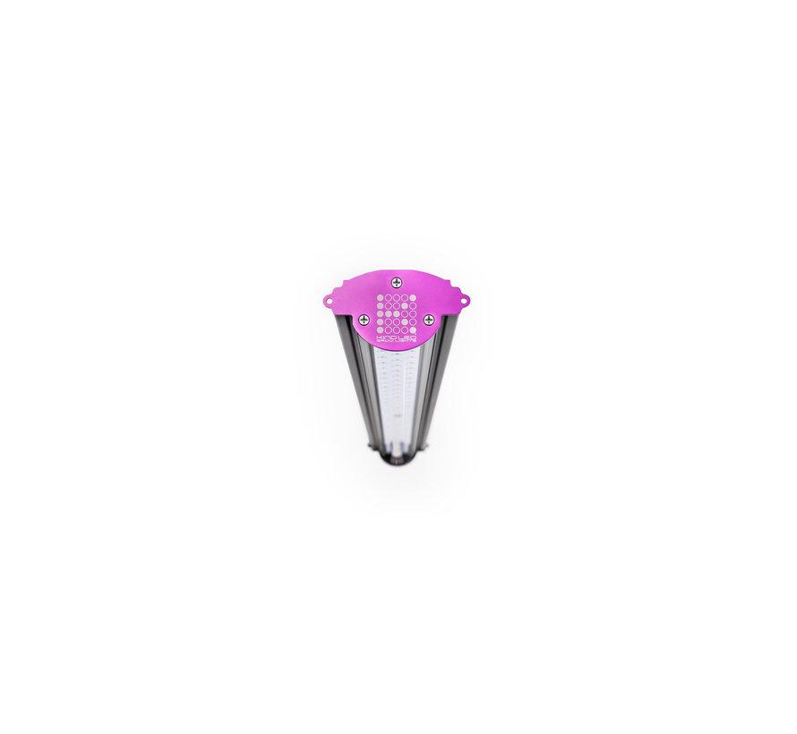 Kind LED X40 (Groei)