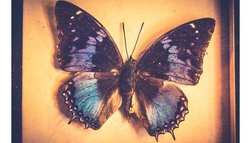 Insecten- en vlinderlijsten bij Brocantiek de Linde