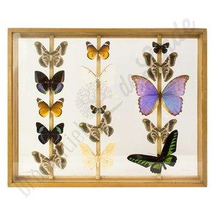 Vlinderlijst vlinders XL No. 22