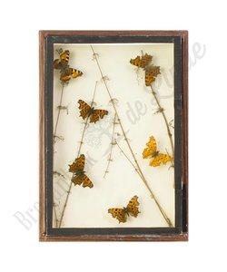 Vlinderlijst met Europese vlinders No. 19