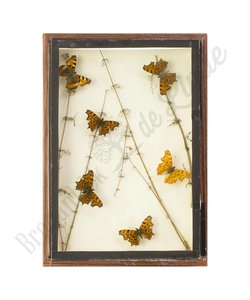 "Vlinderlijst met Europese vlinders ""No. 4"""