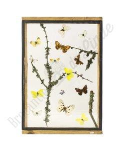 Vlinderlijst Europese vlinders No. 18