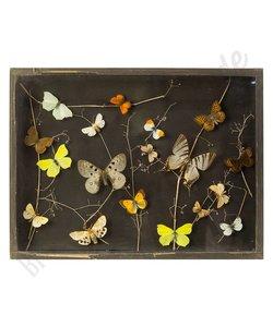 """Vlinderlijst Europese vlinders """"No. 6"""""""