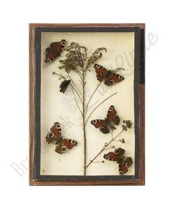 Vlinderlijst dagpauwoog No. 13