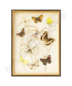 """Vlinderlijst verschillende vlinders """"No. 14"""""""
