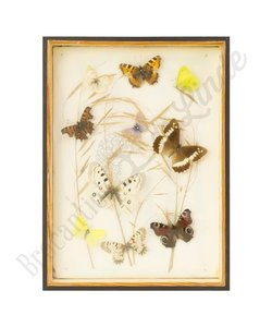 Vlinderlijst verschillende vlinders No. 48