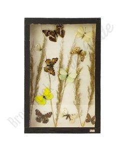 Vlinderlijst Europese vlinders No. 47