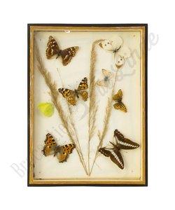 """Vlinderlijst verschillende vlinders """"No. 16"""""""