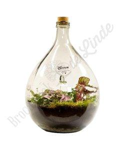 "Plant terrarium ""Urban Jungle XL"""