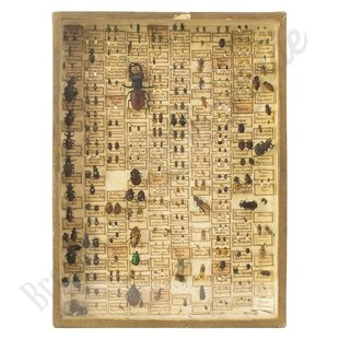 """Insectenlijst met kevers en torren  """"No. 26"""""""