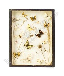 """Vlinderlijst Europese vlinders """"No. 30"""""""