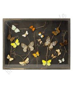 Vlinderlijst Europese vlinders No. 8