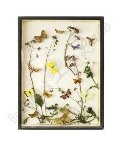 Vlinderlijst No. 7