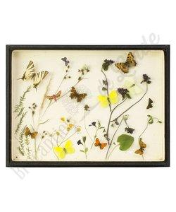 Vlinderlijst No. 6