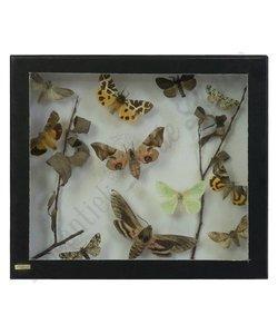 Vlinderlijst No. 44