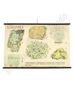 Botanische schoolplaat 'Mos'