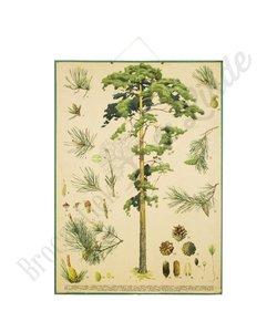 Botanische schoolplaat Den