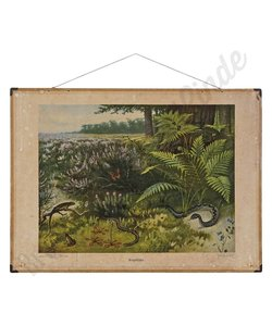 Vintage zoölogische schoolplaat 'Reptielen'