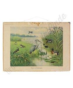 Oude schoolplaat 'Water&Weidevogels'