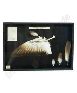 Vlinderlijst No. 55