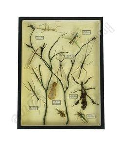 Vitrinelijst natuur insecten No. 75