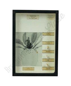 Vlinderlijst No. 16