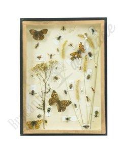 Vlinderlijst No. 3