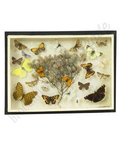 Vlinderlijst No. 1