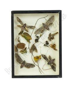 Vlinderlijst 'libelles & kevers' no. 74
