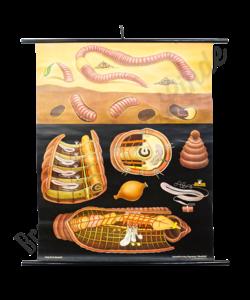 Jung Koch Quentell schoolplaat 'Regen worm'