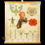 Botanische schoolplaat 'Bloeien en bestuiven van een plant'