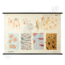 Embryologische schoolplaat 'Steunweefsel'