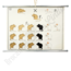 """Scheikundige schoolplaat """"Fenotype rat No.2"""""""