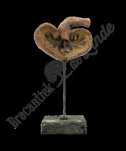 Anatomisch model nier No.1