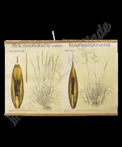 Botanische schoolplaat (Granen)
