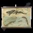 Zoölogische schoolplaat (Salamander)