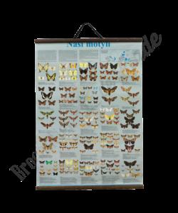 Zoölogische schoolplaat (Onze vlinders)
