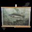 Zoölogisch schoolplaat (Vissen No.2)
