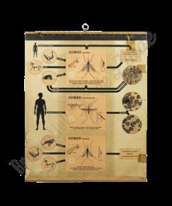 Zoölogische schoolplaat (Muggen)