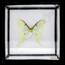 Vintage vlinderlijst No. 56
