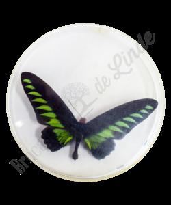 Vlinderlijst No. 50