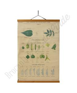 Botanische schoolplaat - Bladeren No. 2